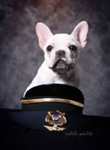 Dog Posing with a Police Uniform